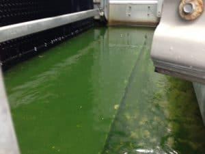 Vor der Kühlturmreinigung: Algen im Kühlturm